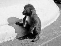 Behandla som ett barn apan i Nepal royaltyfri fotografi