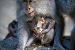 Behandla som ett barn apan med mamman Royaltyfria Foton