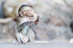 Behandla som ett barn apan som äter durianen Royaltyfria Foton