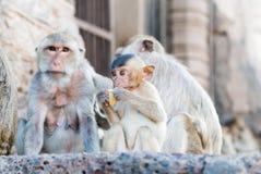 Behandla som ett barn apan som äter durianen Royaltyfria Bilder
