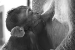 Behandla som ett barn apan som att dricka mjölkar, medan sova Arkivbilder