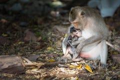Behandla som ett barn apan som diar från moder Arkivbilder