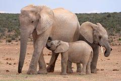behandla som ett barn att dia för elefant royaltyfri foto