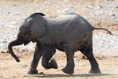 Behandla som ett barn att gå för elefant Arkivbilder