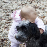 behandla som ett barn att krama för hund Arkivfoto