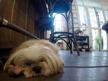 Behandla som ett barn att sova för hund Fotografering för Bildbyråer