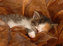 behandla som ett barn att sova för kattunge Arkivfoton