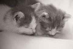 Behandla som ett barn att sova för kattpott Arkivbilder