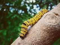 Behandla som ett barn att svänga för larv Royaltyfri Bild