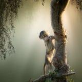 Behandla som ett barn babianen i träd Royaltyfri Foto