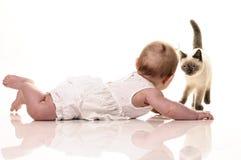 behandla som ett barn bakgrund isolerad kattungewhite Royaltyfri Foto