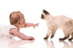 behandla som ett barn bakgrund isolerad kattungewhite Royaltyfria Bilder