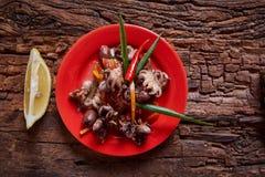 Behandla som ett barn bläckfiskar i röd maträtt Fotografering för Bildbyråer