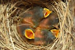 behandla som ett barn blåa fåglar Royaltyfria Foton
