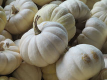 Behandla som ett barn Boo White Pumpkins Batch Arkivfoton