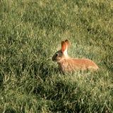 Behandla som ett barn Bunny Rabbit i ängen royaltyfria bilder