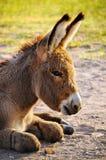 Behandla som ett barn burroen royaltyfria bilder