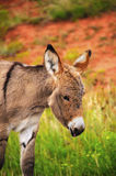 Behandla som ett barn burroen arkivbild