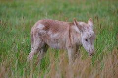 Behandla som ett barn burroen arkivbilder
