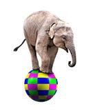 Behandla som ett barn cirkuselefanten Royaltyfria Bilder
