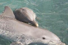 behandla som ett barn delfinmoder två Royaltyfri Foto