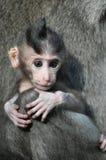 behandla som ett barn den bali indonesia apan Arkivbilder
