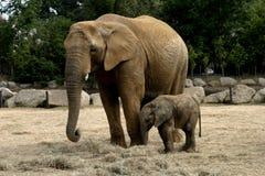 behandla som ett barn den elephany kitoen Arkivbild