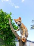 Behandla som ett barn den föräldralösa katten Royaltyfri Fotografi