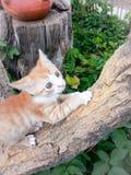 Behandla som ett barn den föräldralösa katten Royaltyfria Bilder