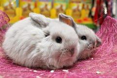 behandla som ett barn den gå i ax aveln lop kaninfår två Royaltyfri Bild