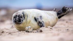 behandla som ett barn den gemensamma skyddsremsan på stranden Royaltyfria Bilder
