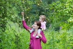 Behandla som ett barn den gravida modern för barn i äppleträdgård med henne Royaltyfri Fotografi