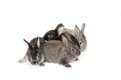 behandla som ett barn den gulliga kaninen Royaltyfria Bilder