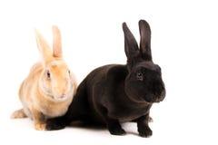 behandla som ett barn den gulliga kaninen henne holdingmoderkaniner fotografering för bildbyråer