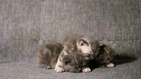 behandla som ett barn den gulliga kattungen arkivfilmer