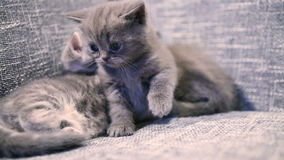 behandla som ett barn den gulliga kattungen lager videofilmer
