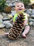 Behandla som ett barn den hållande Sugar Pine pineconen Fotografering för Bildbyråer