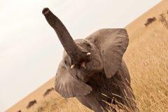 behandla som ett barn den höga stammen för elefanten Royaltyfri Bild