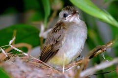 behandla som ett barn den horinzontal fågeln Royaltyfria Bilder