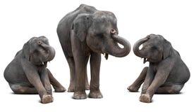 Behandla som ett barn den isolerade elefanten Royaltyfria Bilder