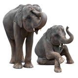 Behandla som ett barn den isolerade elefanten Fotografering för Bildbyråer