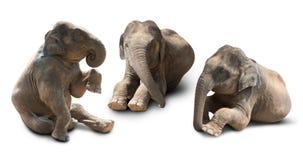 Behandla som ett barn den isolerade elefanten Royaltyfri Bild