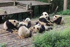 Behandla som ett barn den jätte- pandan för familjen, Chengdu Kina Arkivbilder