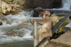 Behandla som ett barn den japanska klättringen för macaquesnöapan vid floden Royaltyfri Foto