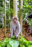 Behandla som ett barn den Makkah apan i ett Forest Park Royaltyfria Bilder