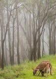behandla som ett barn den matande känguruunge kängurun royaltyfri foto