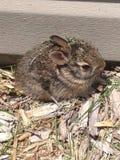 behandla som ett barn den nyfödda kaninetiketten för kaninen Royaltyfri Fotografi