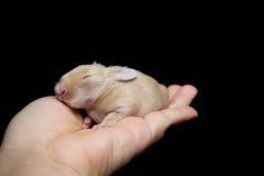 behandla som ett barn den nyfödda kaninetiketten för kaninen Royaltyfria Foton