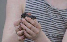 Behandla som ett barn den olivgröna frigöraren för ridleyhavssköldpaddan Arkivbilder