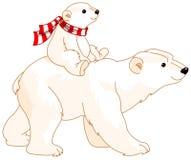 behandla som ett barn den polara björnmomen Royaltyfri Bild